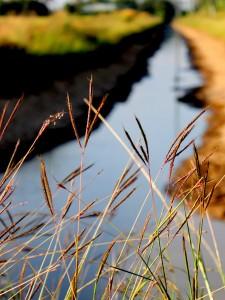 姓名:叶浩毅 S2S4 敘述:《小河畔》:河畔的美丽无需奢华的花卉衬托朴素的稻草已足矣.