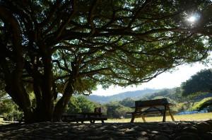 姓名:李锦康 S2C3 敘述:《午后的憩息处》 :午后的大树下,一片凉意。