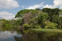 马瑙斯丛林